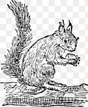 Black And White Squirrel - Eastern Gray Squirrel Prairie Dog Clip Art PNG
