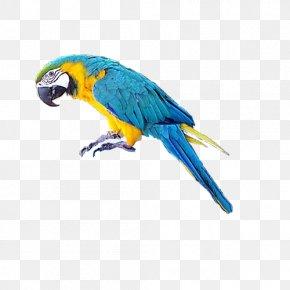 Pirate Parrot - Parrot Bird Macaw Clip Art PNG