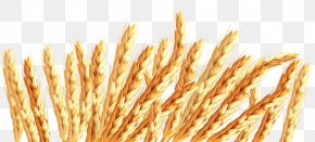 Wind Shakes The Barley - Oat Wheat Icon PNG