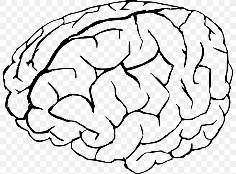 Coloring Book Human Brain Anatomy, PNG, 800x605px ...