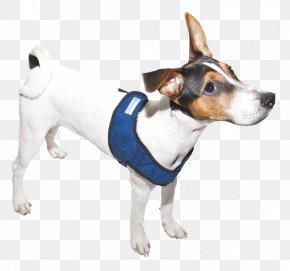 Dog Breed Rat Terrier Toy Fox Terrier Tenterfield Terrier Jack Russell Terrier PNG