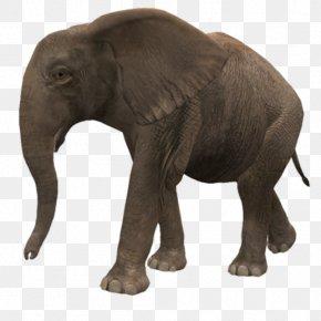 Elephant - Indian Elephant Clip Art PNG