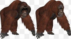 Orangutan - Zoo Tycoon 2 Common Chimpanzee Bornean Orangutan Sumatran Orangutan PNG