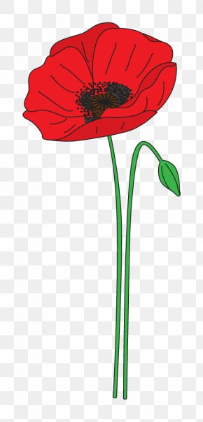 Poppy - Remembrance Poppy Anzac Day Flower Clip Art PNG