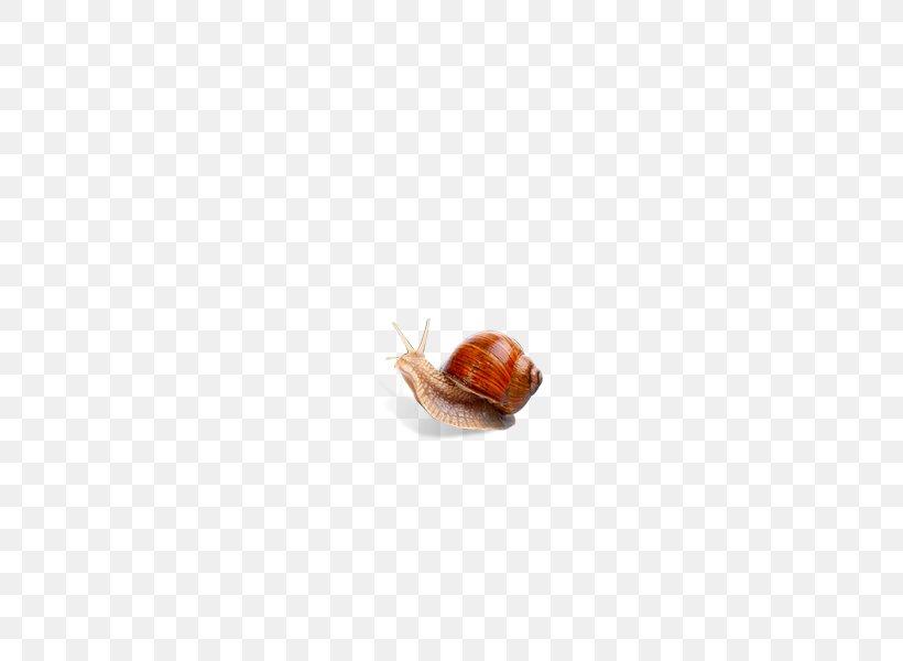 Snail Flooring, PNG, 600x600px, Snail, Flooring, Gastropods, Slug, Snails And Slugs Download Free