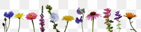 Flower - Calendula Officinalis Flower Bouquet Zinnia Wildflower PNG