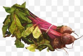 Herb Root Vegetable - Vegetables Cartoon PNG