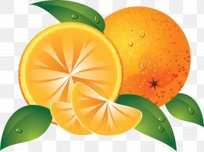Orange Image, Free Download - Orange Slice Clip Art PNG