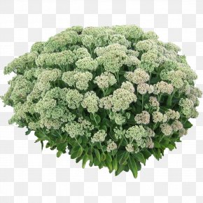 Bush Clipart - Shrub Plant Flower Tree PNG