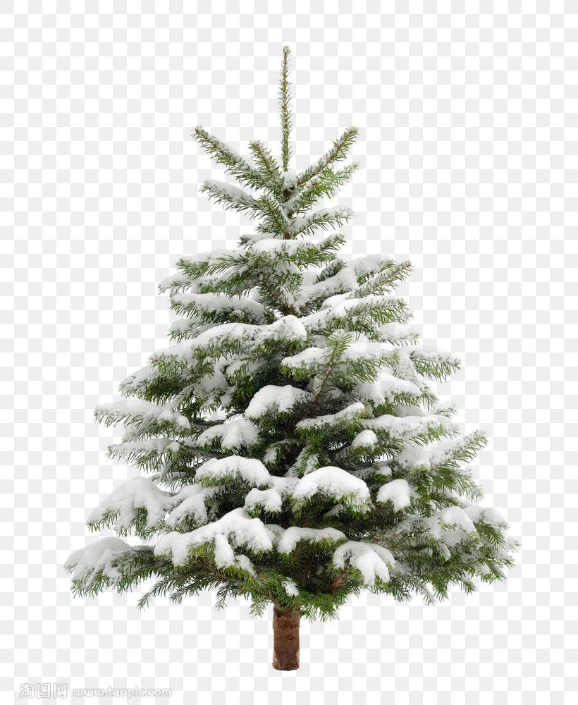 Christmas Tree Snow Fir Pine, PNG, 779x1000px, Norway Spruce, Branch, Christmas Decoration, Christmas Ornament, Christmas Tree Download Free