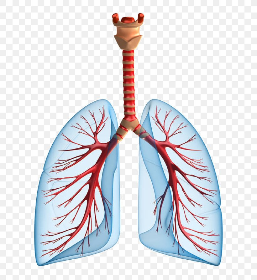 Pulmonary Edema Lung Chronic Obstructive Pulmonary Disease Kidney Failure Png 736x895px Watercolor Cartoon Flower Frame Heart