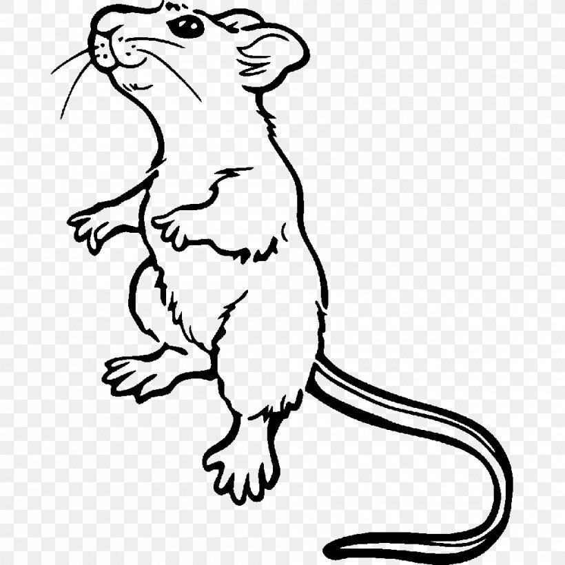 Brown Rat Mouse Coloring Book Laboratory Rat Drawing Png 1000x1000px Brown Rat Animal Figure Art Artwork