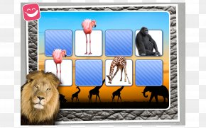 Africa - God's Mirror Leader's Edition Fauna Of Africa Zoo Picture Frames PNG
