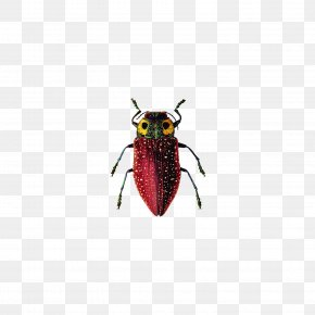 Insect - Insect Cockroach Ichthyornis PNG