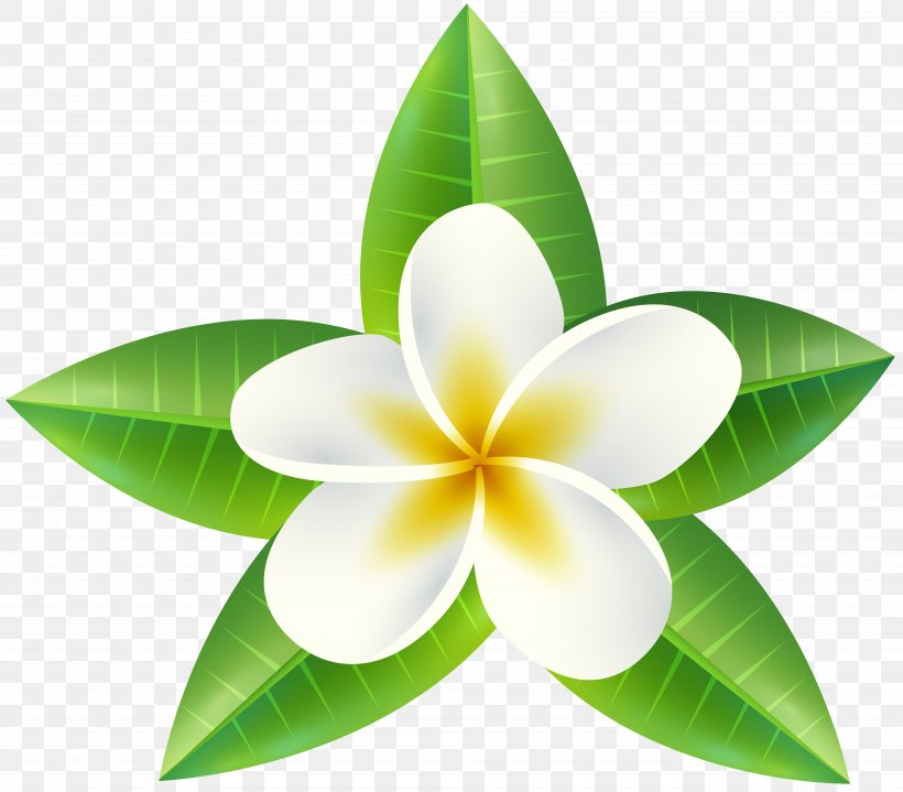 Clip Art, PNG, 8000x7023px, Flower, Common Daisy, Drawing, Floristry, Leaf Download Free