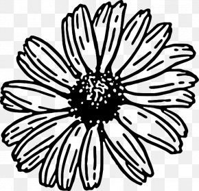 Simple Daisy Cliparts - Transvaal Daisy Common Daisy Free Content Clip Art PNG