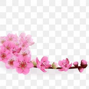 Realistic Sakura PNG