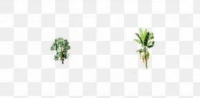 Love Tree - Leaf Plant Stem Tree Herb PNG