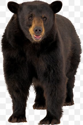 Brown Bear Image - Brown Bear American Black Bear Clip Art PNG