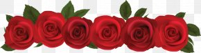 Red Rose Template Download - Rose Flower Clip Art PNG