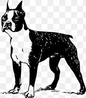 Bulldog - Boston Terrier Scottish Terrier Rat Terrier Bull Terrier Norfolk Terrier PNG