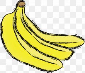Food Plant - Banana Family Saba Banana Banana Cooking Plantain Fruit PNG