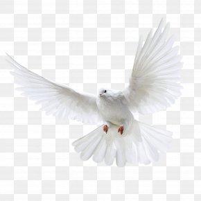 White Flying Pigeon Image - Homing Pigeon Bird Columbinae PNG