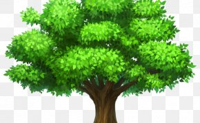 Lush Tree Top - Tree Desktop Wallpaper Clip Art PNG