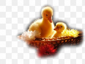 Logic Game For Toddlers Jigsaw Puzzle: Cute AnimalsDuck - Ducklings Desktop Wallpaper Cute Animals PNG