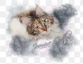Kitten - Whiskers Norwegian Forest Cat Maine Coon Kitten Siberian Cat PNG