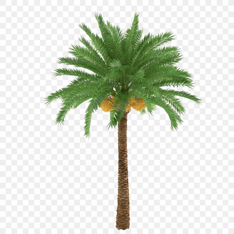 African Oil Palm Arecaceae Tree Trunk Plant, PNG, 1000x1000px, Arecaceae, Arecales, Borassus Flabellifer, Coconut, Date Palm Download Free