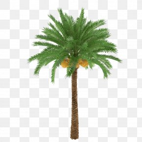 Palm Trees And Subtropical Plants - African Oil Palm Arecaceae Tree Trunk Plant PNG