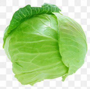 Cabbage - Red Cabbage Cauliflower Savoy Cabbage Coleslaw PNG