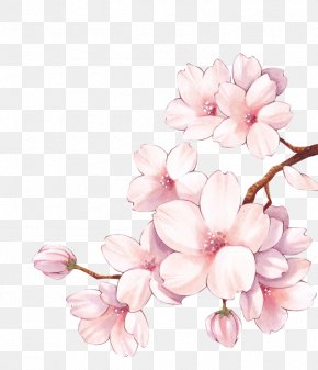 Cherry Blossom - Paper Cherry Blossom Watercolor Painting Flower PNG