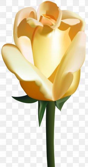 Yellow Rose Clip Art Image - Flower Rose Clip Art PNG