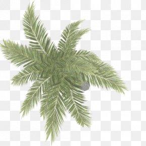 Arecaceae Areca Palm PNG