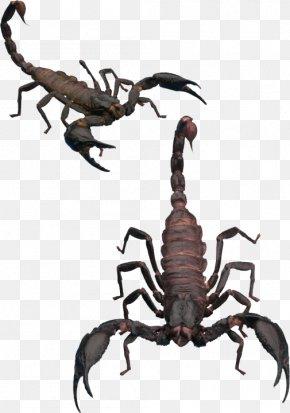 Scorpion Pictures - Scorpion Invertebrate Clip Art PNG
