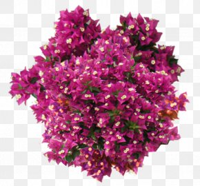 Vegetation - Flowering Plant Shrub Bougainvillea Flowering Plant PNG