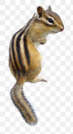Squirrel - Chipmunk Fox Squirrel Wildlife Fur PNG