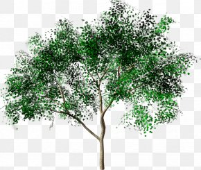 Tree Transparent - Tree Forest Drawing Painting PNG