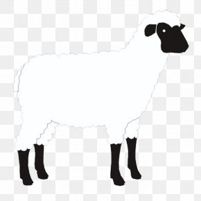 Sheep - Sheep Goat Cattle Alpaca Drobnica PNG