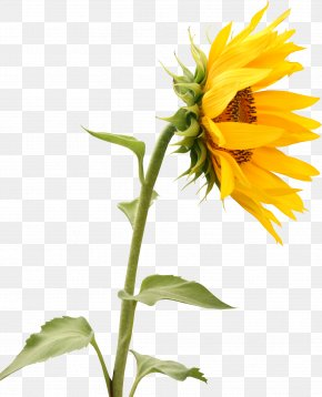 Sunflower Creative - Wall Decal Interior Design Services Sticker Mural PNG