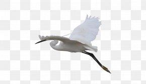 Flying Crane - Beak Bird Goose Duck Cygnini PNG