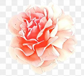 Pink Family Floribunda - Watercolor Pink Flowers PNG