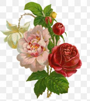 Painting - Garden Roses Painting Art Clip Art PNG
