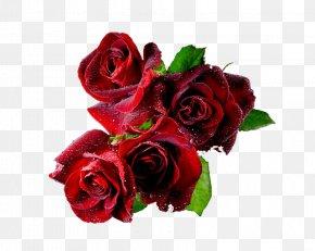 Valentine's Day - Valentine's Day Desktop Wallpaper Animation PNG