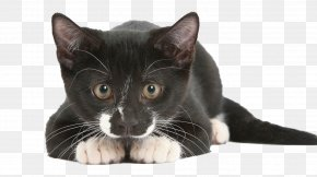 Cat - Cat Sense: The Feline Enigma Revealed Dog Sense: How The New Science Of Dog Behavior Can Make You A Better Friend To Your Pet Felidae PNG