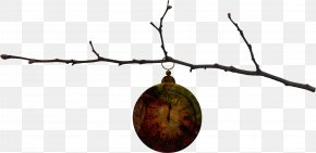 Clock Tree Branch - Twig PNG
