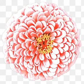 Common Zinnia Artificial Flower - Floral Flower Background PNG