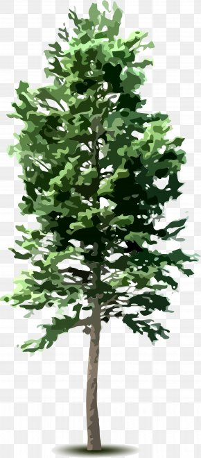 Tree Top - Tree Plant Clip Art PNG